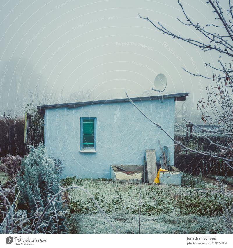 Väterchen Frost XIV Winter Natur Pflanze Herbst Nebel Traurigkeit kalt Trauer Sehnsucht Heimweh Einsamkeit Vergänglichkeit Jahreszeiten Eis gefroren blau