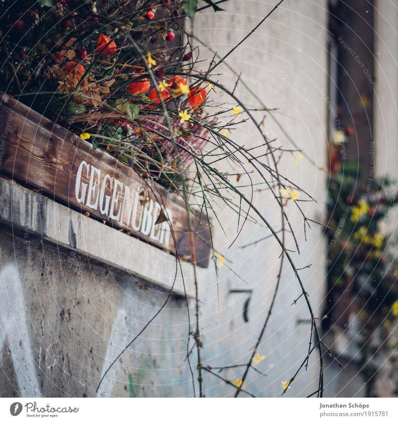 gegenüber Kleinstadt Haus Fenster ästhetisch schön Glück Fröhlichkeit Warmherzigkeit Sympathie Freundschaft Zusammensein Liebe Verliebtheit Treue Romantik