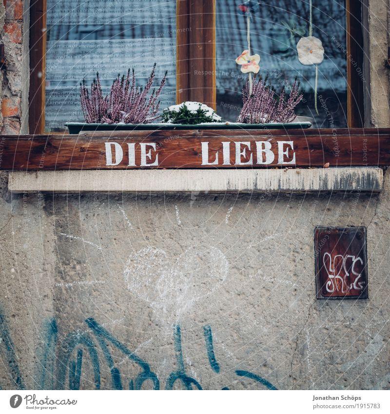 Liebe, die Pflanze Stadt schön weiß Haus Winter Fenster Graffiti Holz Glück braun Zusammensein Freundschaft Schriftzeichen ästhetisch