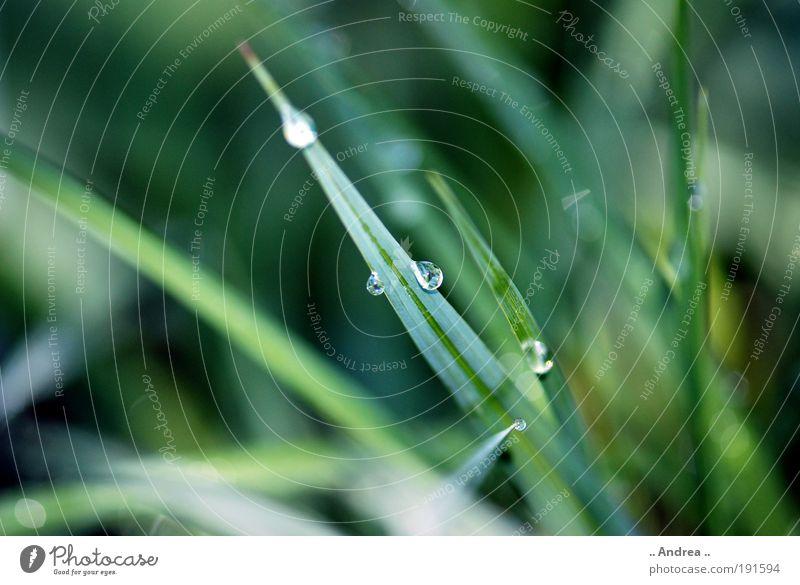 Speerspitze Natur Wasser weiß grün Pflanze Blatt Leben kalt Wiese Gras Feld glänzend Wassertropfen Tropfen Tau silber