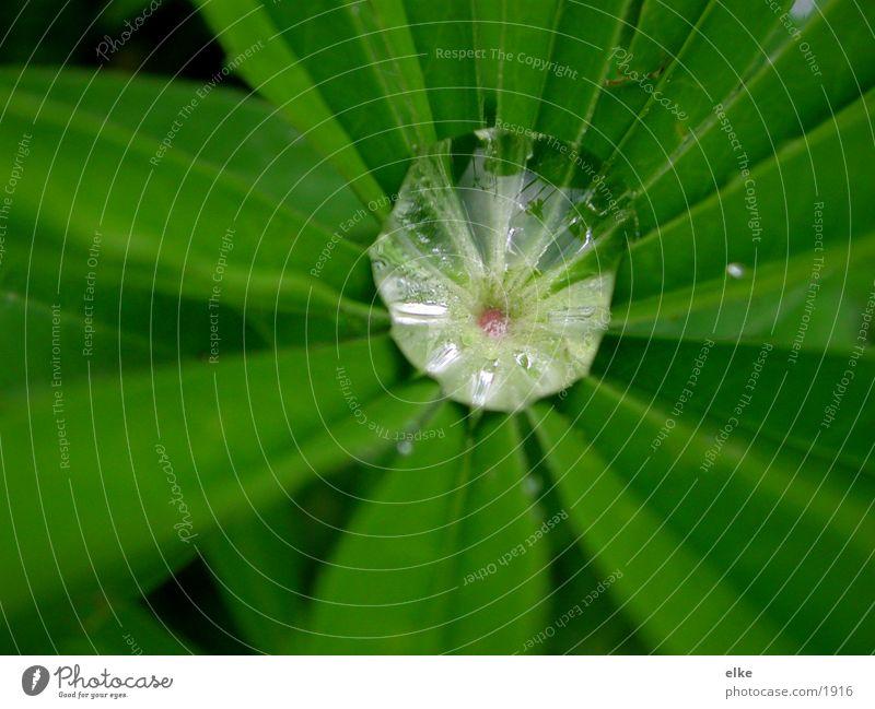 auffangbecken Wassertropfen Pflanze