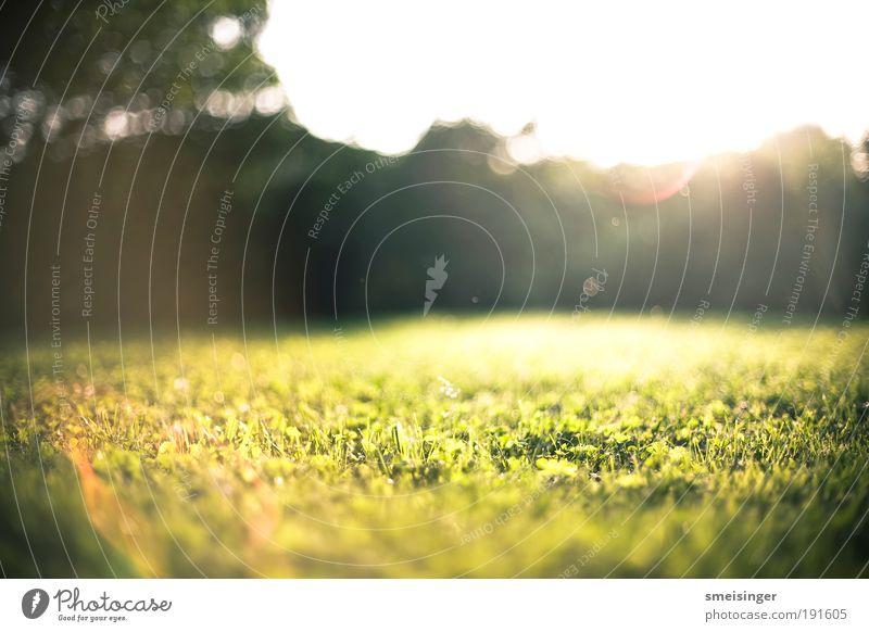garten Natur Sonne grün Pflanze Sommer Ferien & Urlaub & Reisen ruhig gelb Wiese Gras Garten Glück Park Zufriedenheit Umwelt gold