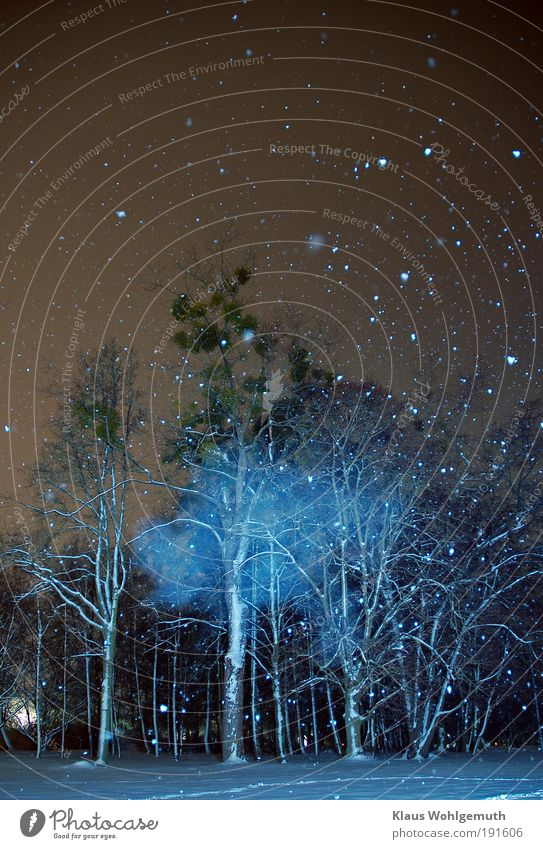 Es geschah um Mitternacht1 Nachthimmel Schnee Schneefall Baum Mistel Park blau weiß ruhig mystisch Farbfoto Außenaufnahme Experiment Menschenleer Kunstlicht