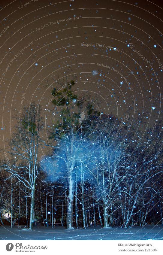 Es geschah um Mitternacht1 weiß blau Baum ruhig Schnee Schneefall Park mystisch Nachthimmel Schneeflocke Licht Natur geisterhaft Winterwald Mistel Geisterstunde
