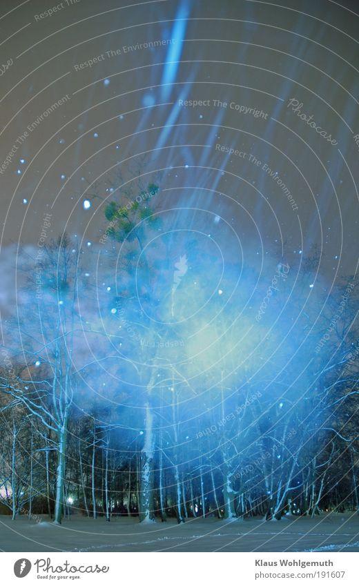 Es geschah um Mitternacht 2 weiß blau Baum Pflanze Winter Schnee Schneefall Park leuchten geheimnisvoll frieren Geister u. Gespenster Langzeitbelichtung erleuchten Nachthimmel unheimlich