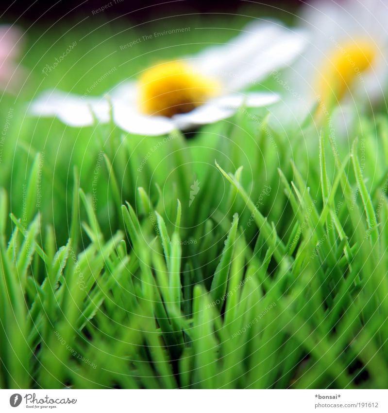 coming soon... Natur weiß Blume grün gelb Farbe Gras Frühling Kraft frisch Wachstum Kitsch Dekoration & Verzierung natürlich Blühend Duft