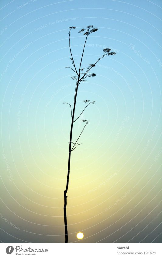 kleine Sonne Natur Himmel Baum Sonne blau Pflanze Landschaft Stimmung klein Kitsch leuchten Licht Lichtspiel Geäst