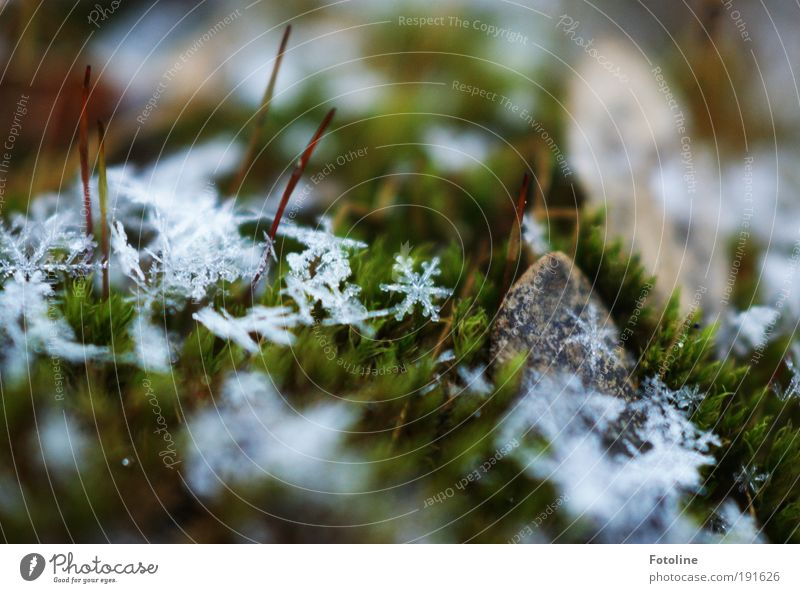 Sternchen Umwelt Natur Landschaft Pflanze Urelemente Wasser Klima Klimawandel Wetter Schönes Wetter schlechtes Wetter Eis Frost Schnee Moos Park Wiese Coolness