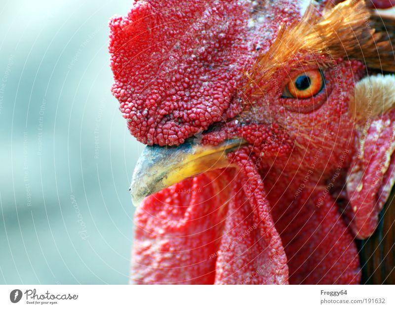 * 80* Was guckst Du? rot Tier gelb Erholung Vogel Umweltschutz Nutztier Frühlingsgefühle Tierliebe Gefühle