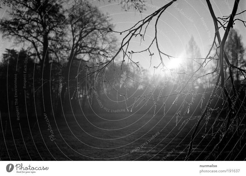 Frost im Geäst Natur Baum Winter Ferien & Urlaub & Reisen Wald Erholung Garten träumen Traurigkeit Park Landschaft Eis Kunst warten glänzend Umwelt