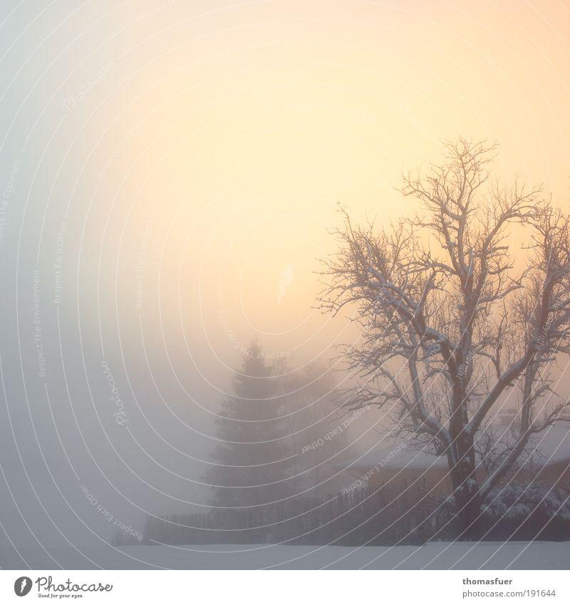 mit angehaltenem Atem staunen Natur schön Himmel Baum Winter Ferien & Urlaub & Reisen ruhig Haus Schnee Berge u. Gebirge träumen Landschaft Luft Eis