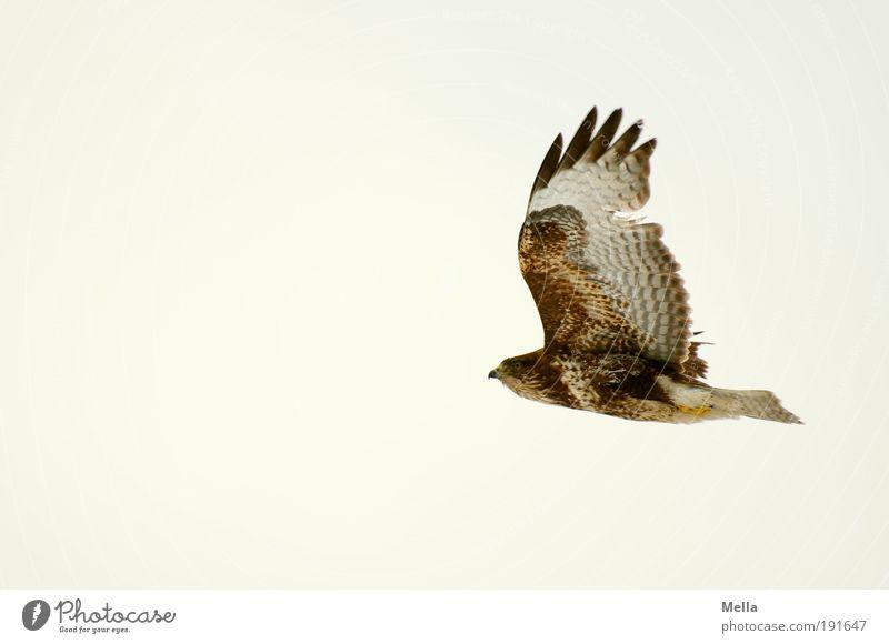 Überleben Natur Himmel Tier Leben Freiheit Luft Kraft Vogel elegant Umwelt fliegen frei ästhetisch Flügel natürlich Unendlichkeit