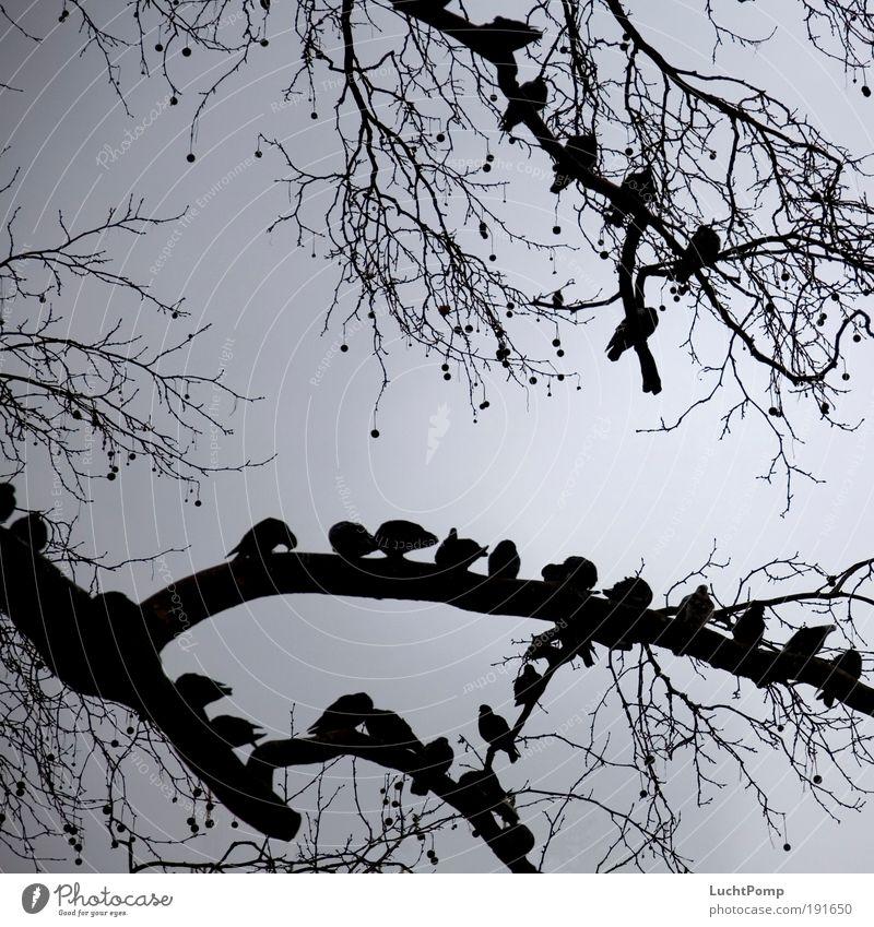 Warten Himmel Baum ruhig schwarz grau Freundschaft Zufriedenheit Zusammensein Angst warten Sicherheit gefährlich bedrohlich Schutz beobachten Ast