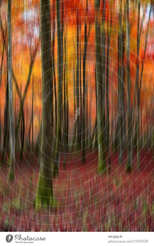 Waldbrand Natur Pflanze Baum Landschaft rot gelb Traurigkeit Herbst orange träumen Vergänglichkeit Wandel & Veränderung Trauer Baumstamm Jahreszeiten