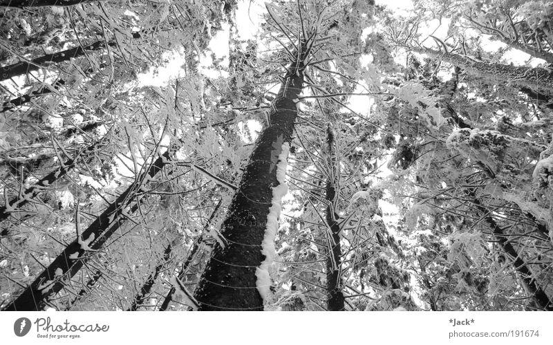 Zauberwald Natur alt weiß Baum Pflanze Winter Einsamkeit Wald kalt Schnee Erholung Berge u. Gebirge träumen Landschaft Zufriedenheit Stimmung