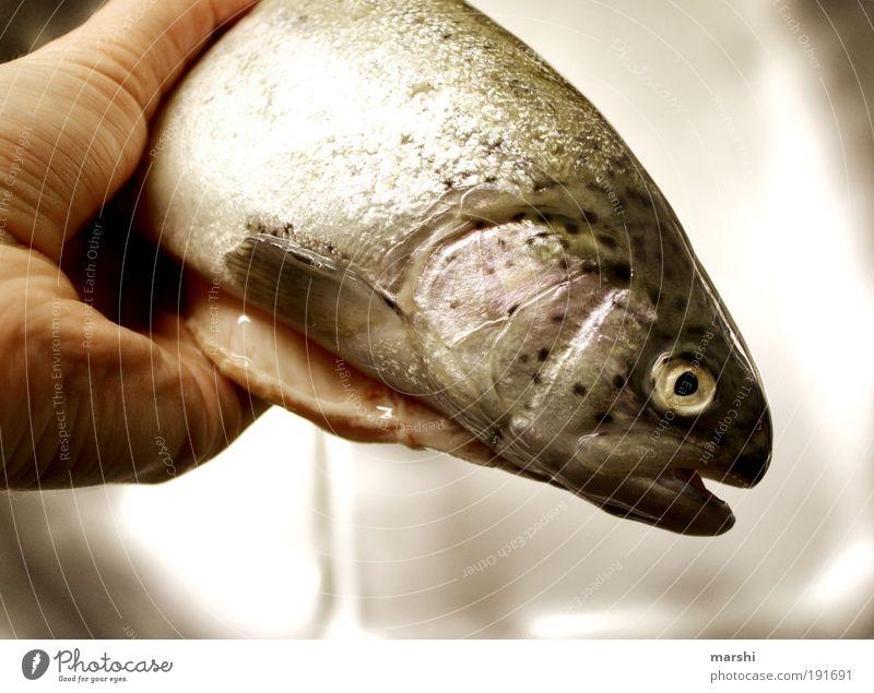 es fischelt... Lebensmittel Fisch Ernährung Sushi Natur Tier Schuppen 1 festhalten Glätte Forelle fischig Geruch Farbfoto Übelriechend Fischkopf Fischauge