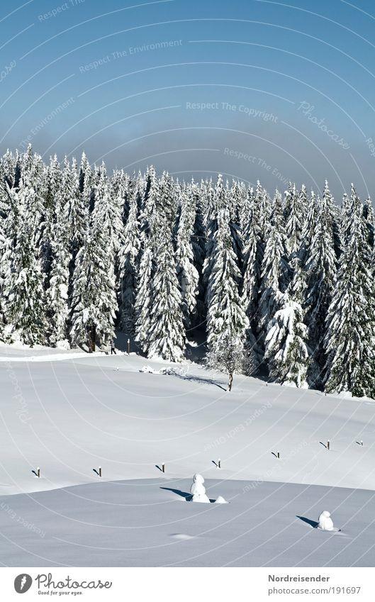 Tauwetter nicht in Sicht Himmel Natur Ferien & Urlaub & Reisen Sonne Erholung Landschaft ruhig Freude Winter Wald Berge u. Gebirge Schnee natürlich Lifestyle Stimmung Tourismus