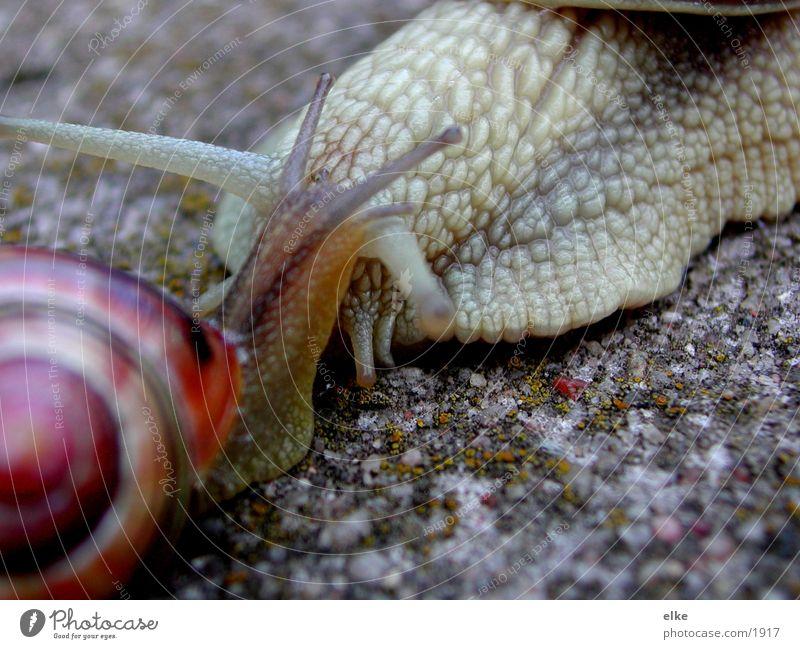 ich mag dich sehr Schneckenhaus Weinbergschnecken Verkehr Sand