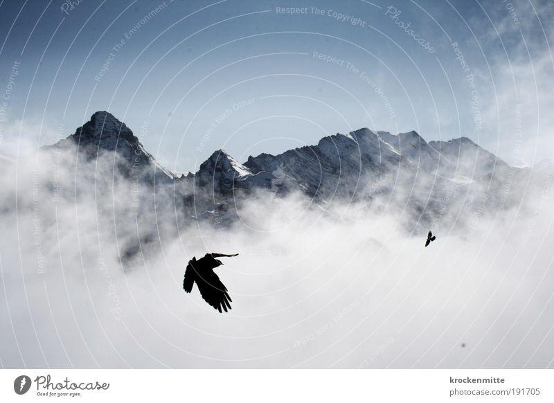 Höhenflieger Natur Himmel Winter Wolken Tier Schnee Berge u. Gebirge Landschaft Vogel wandern Nebel Wetter fliegen frei Horizont Felsen