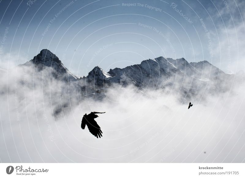 Höhenflieger Tourismus Ausflug Winter Schnee Winterurlaub Berge u. Gebirge wandern Klettern Bergsteigen Natur Landschaft Himmel Wolken Horizont Wetter Nebel