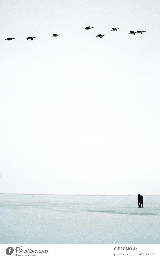 Reisende soll man ziehen lassen Mensch Mann Natur Ferien & Urlaub & Reisen Meer Winter Tier Erwachsene Ferne Erholung Landschaft Schnee Freiheit Paar Vogel