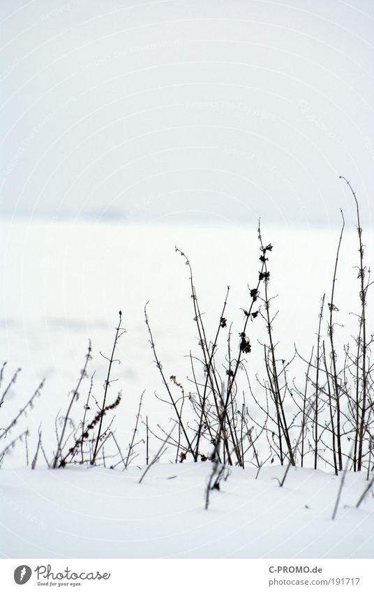 Einmal nur die Spitzen Natur weiß ruhig Ferne kalt Schnee Eis Frost Schneewehe