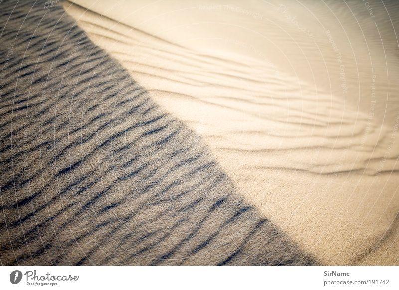 119 [dune] Ferien & Urlaub & Reisen Freiheit Sommer Sommerurlaub Strand Umwelt Natur Landschaft Sand Sonnenaufgang Sonnenuntergang Küste Wüste Unendlichkeit