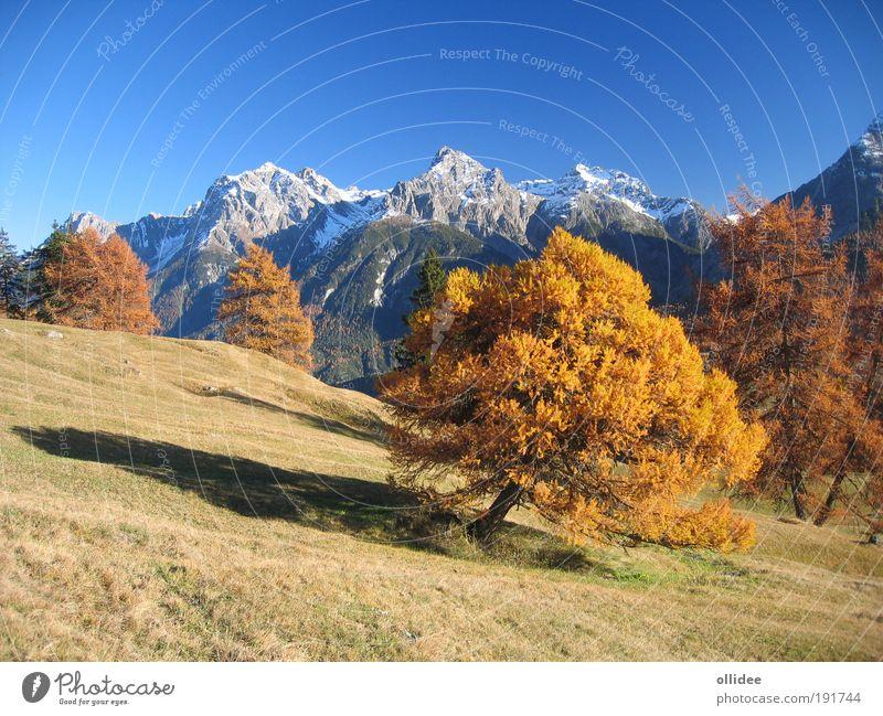 Bergherbst 01 Natur Baum blau Ferien & Urlaub & Reisen gelb Farbe Erholung Herbst Wiese Berge u. Gebirge Wärme Landschaft Zufriedenheit braun laufen frisch