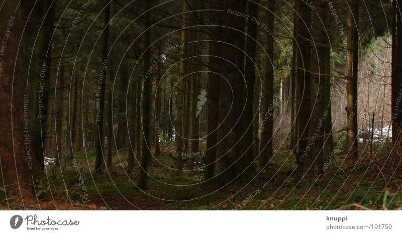 Im Wald ist s düster Natur alt grün Baum rot Pflanze Winter Blatt Tier schwarz ruhig Wald Erholung Umwelt Leben Landschaft