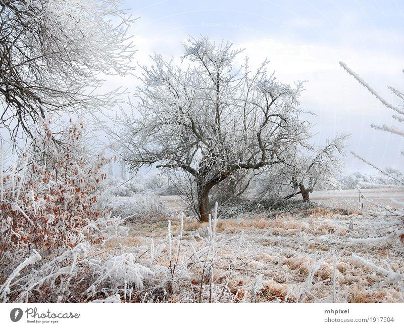 Winterspaziergang Natur Landschaft Eis Frost Schnee Baum Feld Stadtrand Menschenleer kalt Stimmung Raureif Winterstimmung Farbfoto Außenaufnahme Tag