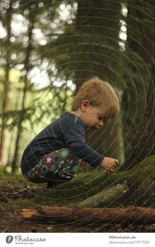 Entdeckung Mensch maskulin Kind Kleinkind Junge Kindheit 1 1-3 Jahre Umwelt Natur Landschaft Sommer Baum Moos Wald beobachten entdecken hocken lernen