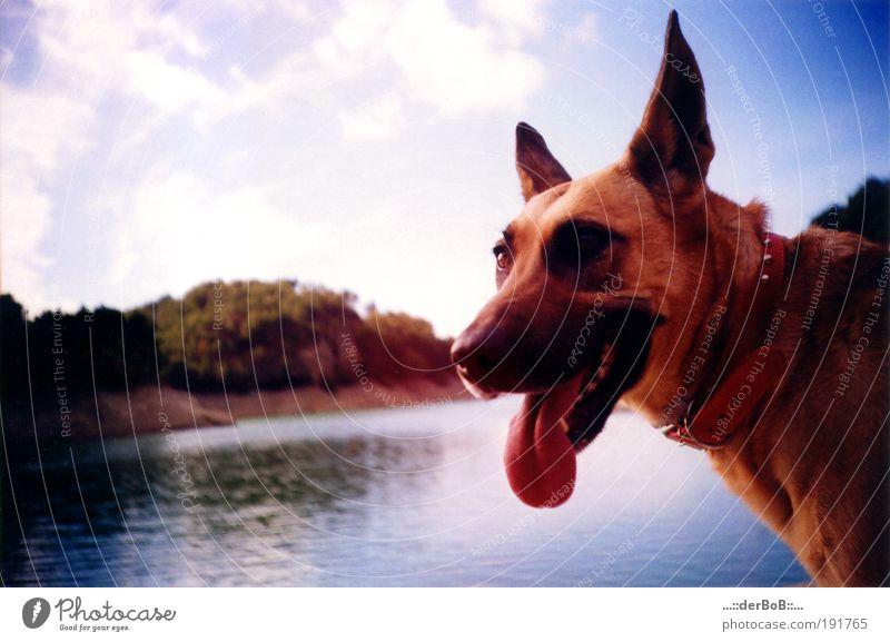 WANDASTAR Wasser schön Himmel blau rot Freude Tier Leben Glück Hund Landschaft braun Zusammensein Tiergesicht Lebensfreude natürlich