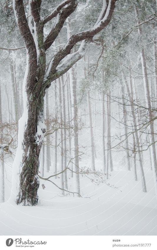 Neuschnee Umwelt Natur Landschaft Pflanze Urelemente Winter Klima Wetter Sturm Nebel Eis Frost Schnee Baum Wald kalt weiß Stimmung Traurigkeit Einsamkeit