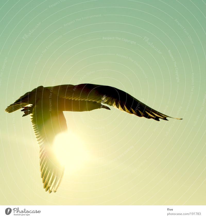 freiheit Natur Himmel Sonne ruhig Tier Freiheit Zufriedenheit Vogel fliegen Flügel Sonnenstrahlen Unendlichkeit entdecken Möwe Fernweh