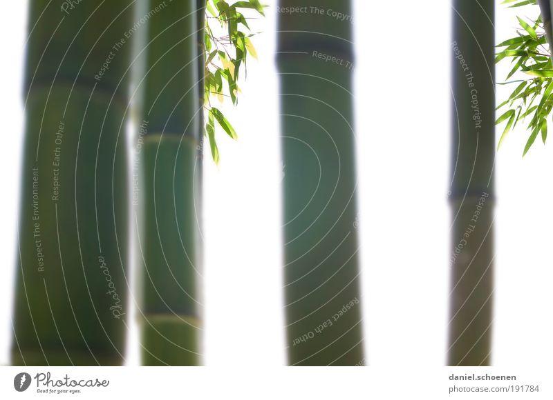 Gegenlichtbambus Natur Pflanze Baum Sträucher Blatt Grünpflanze ästhetisch elegant grün weiß Asien Japanischer Garten Licht Silhouette Sonnenlicht