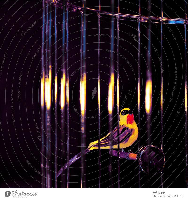 im goldenen käfig Natur schön Tier Vogel Wohnung Gold Sicherheit bedrohlich einzigartig Häusliches Leben Schutz beobachten Zoo Reichtum Haustier exotisch