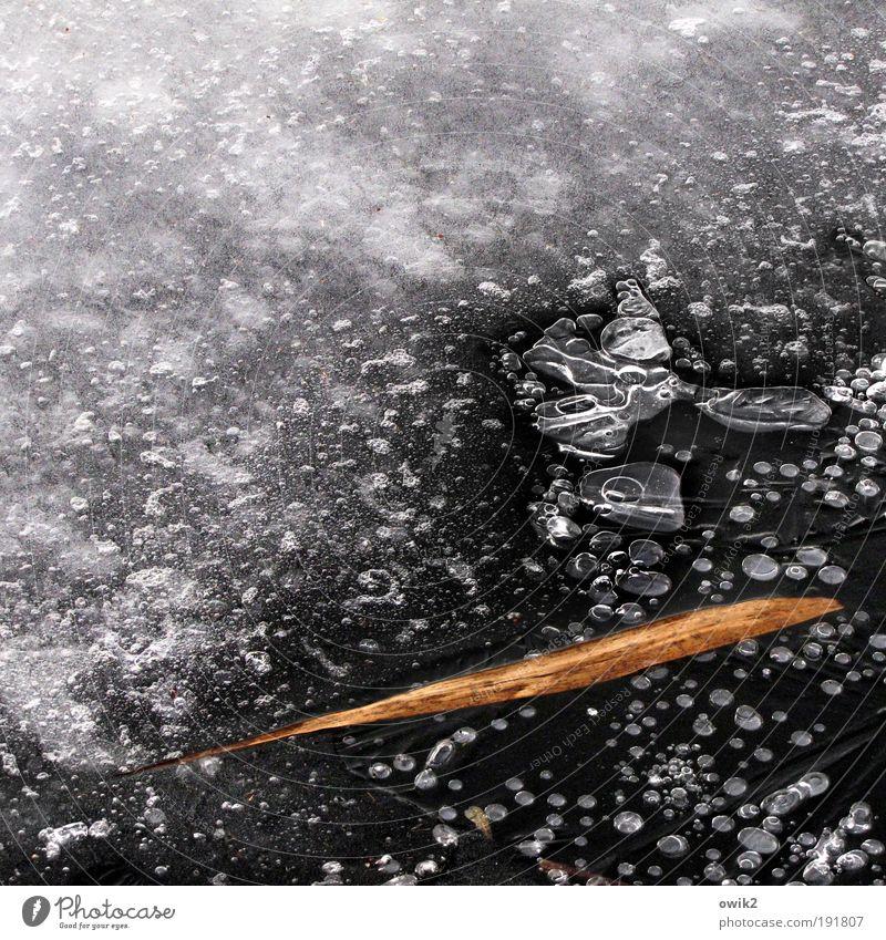 Souvenir Umwelt Natur Urelemente Winter Eis Frost Pflanze Blatt Schilfrohr See Oberfläche Wasserblase gefroren frieren liegen dehydrieren warten dünn einfach