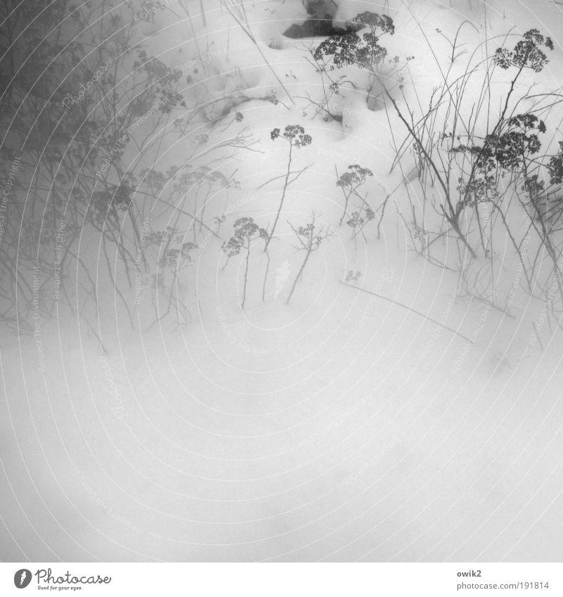 Winter diffus Umwelt Natur Pflanze Urelemente Luft Wasser Wassertropfen Klima Wetter Nebel Eis Frost Schnee Sträucher Wildpflanze frieren verblüht dehydrieren