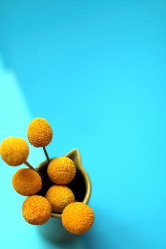 gelbe Blumen auf blauem Hintergrund 6 schön Erholung ruhig Freude Wärme Leben Innenarchitektur Gefühle Lifestyle feminin Stil Garten Design wild