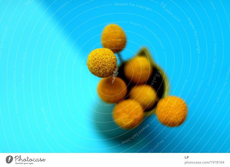 gelbe Blumen auf blauem Hintergrund 5 schön Erholung ruhig Freude Wärme Leben Innenarchitektur Gefühle Lifestyle feminin Stil Design Häusliches Leben