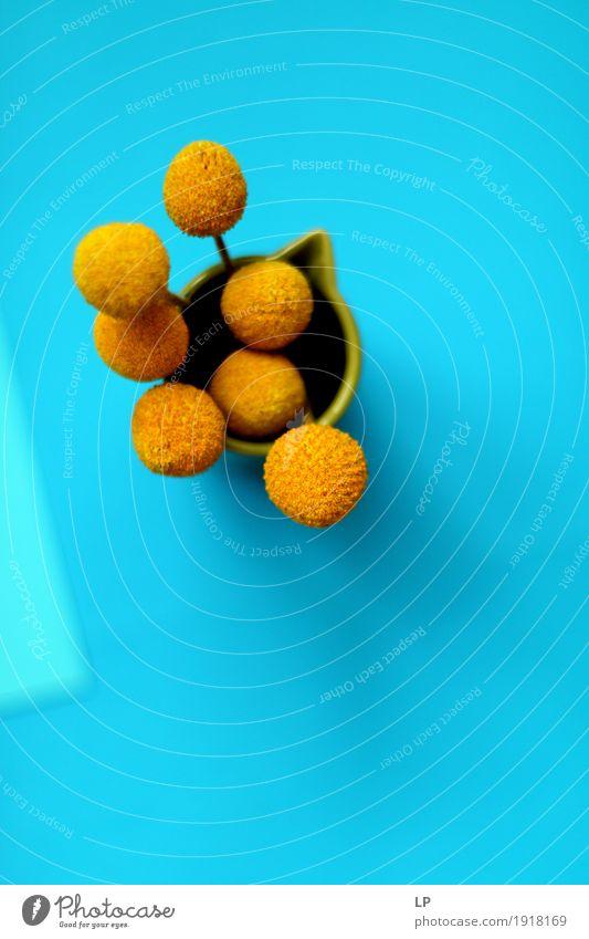 gelbe Blumen auf blauem Hintergrund 2 Lifestyle elegant Stil Design exotisch Freude Kunst Printmedien Pflanze Craspedia Billy-Knöpfe schön Wärme feminin wild
