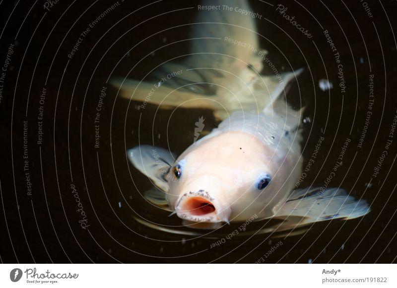 kiss me Natur Wasser Freude Ferien & Urlaub & Reisen Auge Tier Ferne Gefühle elegant Fisch offen Freizeit & Hobby Asien Vertrauen