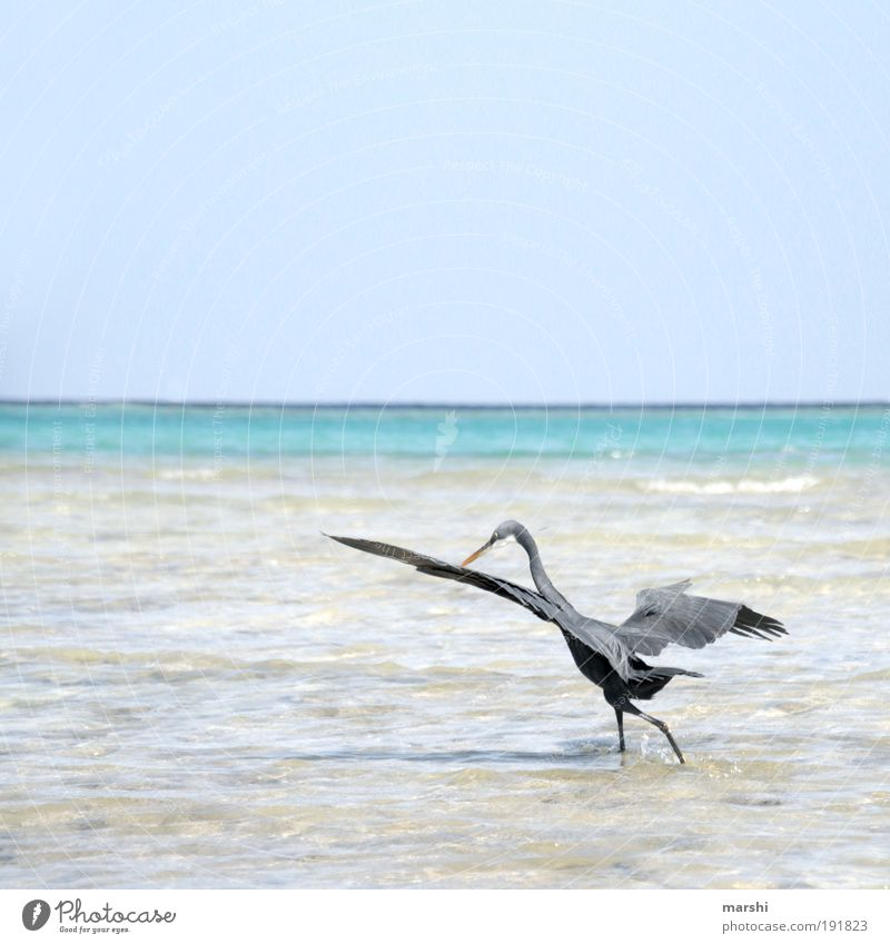 meins meins meins Natur Wasser Himmel Meer blau Sommer Strand Tier grau Vogel Wetter Feder Flügel Jagd Appetit & Hunger Angeln