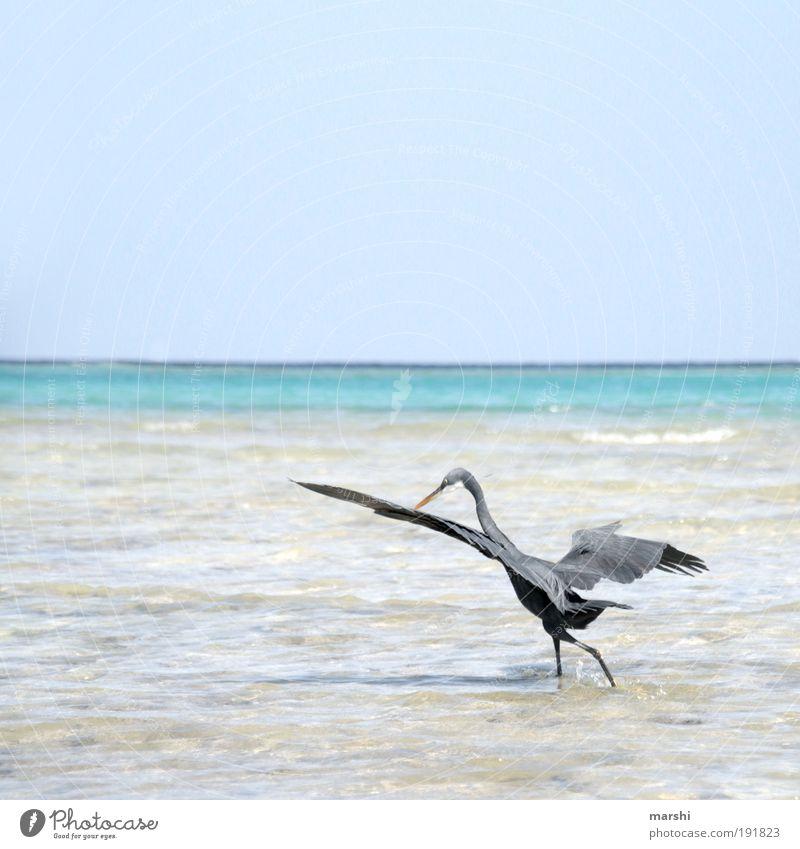 meins meins meins Natur Wasser Himmel Sommer Wetter Tier Flügel 1 Jagd Vogel Reiher grau blau Blauer Himmel Meer Strand Feder Appetit & Hunger Angeln Farbfoto