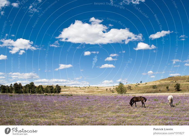 die habens gut Natur Himmel Baum blau Sommer Ferien & Urlaub & Reisen ruhig Wolken Tier Ferne Wiese Gras Freiheit Landschaft Luft wandern