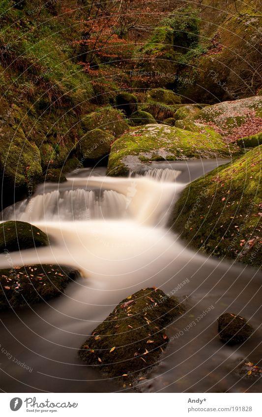 La riviere d'argent Natur Wasser grün Baum Ferien & Urlaub & Reisen ruhig Ferne Wald gelb Erholung Herbst Landschaft Stein gehen Freizeit & Hobby frei