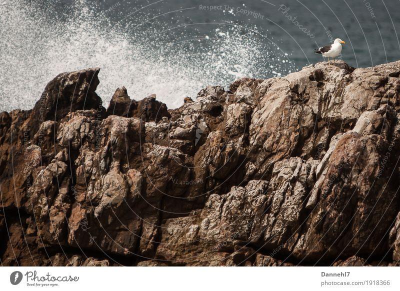 Die Möwe I Meer Insel Wellen Menschenleer Vogel fliegen hocken maritim blau braun grau schwarz weiß Zufriedenheit Vertrauen Sicherheit Schutz Einsamkeit