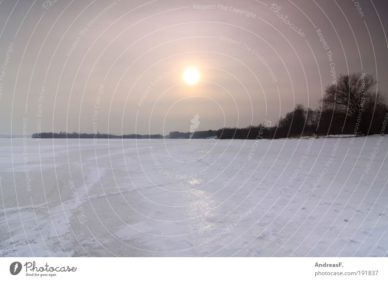 noch ein Winterbild Umwelt Natur Landschaft Wasser Himmel Sonne Sonnenaufgang Sonnenuntergang Sonnenlicht Eis Frost Baum Seeufer kalt Eisfläche gefroren