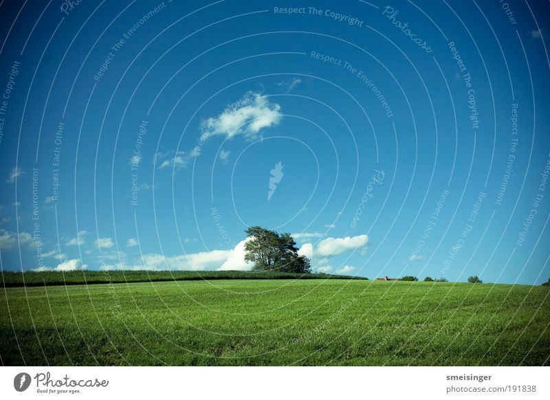 baum Natur Himmel Baum grün blau Pflanze Sommer ruhig Wolken Erholung Wiese Gras Freiheit Wärme Landschaft Zufriedenheit