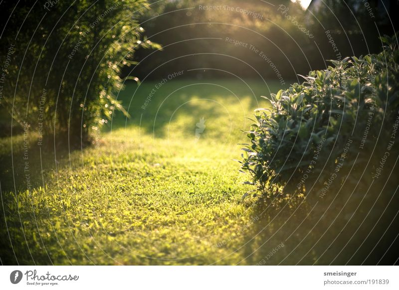 garten Natur grün Pflanze Sommer ruhig gelb Erholung Wiese Gras Garten Park Landschaft Zufriedenheit Umwelt gold Sträucher
